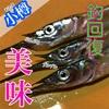 9月14日 小樽 北浜岸壁 サバでも釣ってHP回復しよっ!