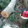 薪ストーブ始生代33 原木を入手する~神社の薪②