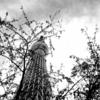 東京スカイツリーに行ったことがある