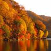 彼女が今年の秋に旅行したい場所を、関東の紅葉名所で決めてもらった