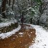 雪の日の散歩♪