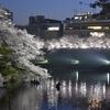 千鳥ヶ淵の夜桜2018