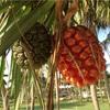 【世界の絶景!夫婦で巡る旅ブログ】 大都会の楽園!『Bintan(ビンタン)島』の旅❷