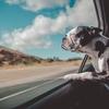 犬がストレスを感じる原因、行動、ストレス解消方法を納得のいくまで調べました