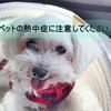 犬や猫の熱中症にご注意を!~車内・炎天下に放置しないでください