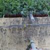 3つ目の耕起田んぼの最後の除草機です。収穫は厳しそう…(田植え後6週目)