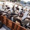 ペンギン餌やり体験