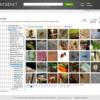 Deep Learningでヒアリを検出・判定する(YOLO9000)