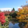 【日光観光】中禅寺湖と世界遺産日光の社寺の紅葉を見てきた