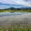 芒種と雨上がりと「こなし」と「尻踏み」と草刈りとあれこれと蛙の鳴き声と長浜市T氏