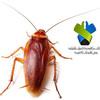 صرصور الليل بحث علمي عن دورة حياة جميع انواع الحشرات الارضية الطائرة المضرة في المنزل الصراصير الامريكية الالمانية الاسيوية.