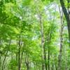 ストレスが溜まったら森へ行け!