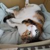 【愛猫日記】毎日アンヌさん#264