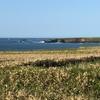 道東のこの景色は、北アイルランドの海岸と同じ