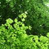 春の植物と夕暮れの諏訪・立石公園