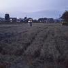 学外畑のひまわり刈り取りと学内畑の菜種まき,そして焼き芋