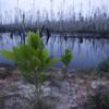 植物の生態系に異変:過去250年間で571種が地球上から消えた!  (BBC-Science & Environment, June 11, 2019)