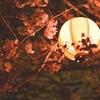 【VTR】(夜の)鹿島神宮 と かしま桜まつり