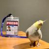 APA 日本広告写真家協会 正会員になりました。