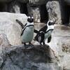 長崎ペンギン水族館 - 2013夏長崎