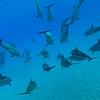 GoPro(ゴープロ)で撮ったイルカの写真がかわいくていいぞっ!#goprodolphins