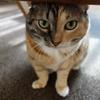 しじみ家の猫トイレのおはなし。