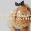【Vol.3】うさ飼いさんにインタビューしてみました!(@0405_axelaさんと風花ちゃんと凛音愛ちゃん編)