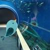 琵琶湖博物館【オオサンショウウオに会える!動物園・水族館②】