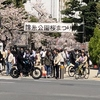 錦糸公園 桜まつり 2018年 (1)