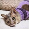 シニア猫の通院おでかけセーター|着たまま診察&フリーサイズ