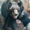 動物園も野生と人の共生を啓蒙してほしい
