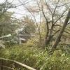 石神井公園でお花見と、言及へのお礼。