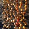 2020´干し柿&試食 ~2020´ Dried Persimmons & Tasting
