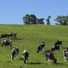 牛はどのようにして草からタンパク質を作るのか?