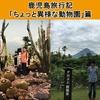 鹿児島にある長崎鼻パーキングガーデンに行ってオランウータンに会ってきました