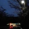 サクラも沁みない、ナゲーのフーケー 残念ながら始まります!犬山・境川の桜