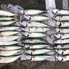 【釣行記】舞鶴沖で強制終了するほど爆釣しました。