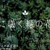 『無料/フリーBGM素材』優しく響く切ないピアノ曲「夏に咲く緑の花々 BGM素材紹介