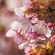 今日も撮ってきました「河津桜」