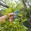ソウギョチャレンジ!柳の新芽を餌に14時間粘るも完敗