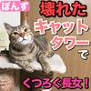 壊れたキャットタワーでくつろぐ猫!【長女ぽんず】