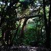 星野リゾート西表島ホテルは大自然の中に佇むホテルだ。【ジャングルと花とマングローブに感動】