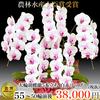 当選祝いに胡蝶蘭が人気の理由と選ぶポイント