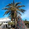 海の中にクリスマスツリーが