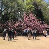 新宿御苑で撮影会