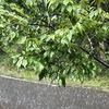 叩きつける様な雨