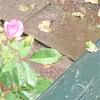 「井の中の蛙」は幸せか。ぼくは幸せだと思う。