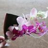 2回目は?ポストに届く花の定期便BloomeeLIFE(ブルーミーライフ)の感想