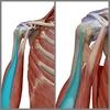 """【ベンチプレス】""""肩の前側が痛い""""フォームの原因は「肘の使い方」で解消!上腕二頭筋長頭腱編"""