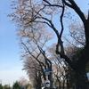 オンライン中澤晶子さんを囲む会 無事終わる。充実した意見交換の場。